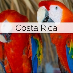 Destination Wedding in Costa Rica // Suppliers, Legal Guidelines, Planning Tips plus more