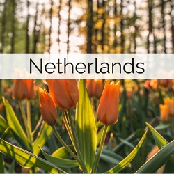 Information on getting married in the Netherlands